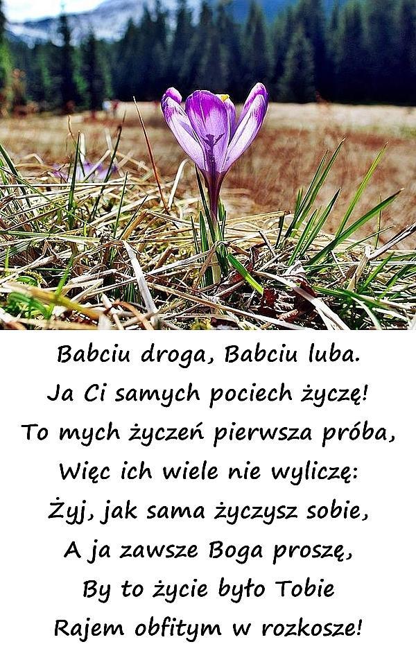 Babciu droga, Babciu luba. Ja Ci samych pociech życzę! To mych życzeń pierwsza próba, Więc ich wiele nie wyliczę: Żyj, jak sama życzysz sobie, A ja zawsze Boga proszę, By to życie było Tobie Rajem obfitym w rozkosze!