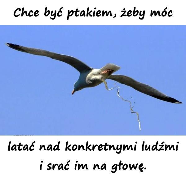 Chce być ptakiem, żeby móc latać nad konkretnymi ludźmi i srać im na głowę.