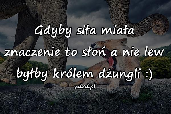 Gdyby siła miała znaczenie to słoń a nie lew byłby królem dżungli :)