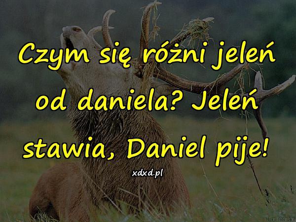 Czym się różni jeleń od daniela? Jeleń stawia, Daniel pije!