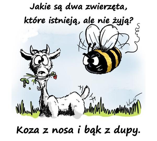 Jakie są dwa zwierzęta, które istnieją, ale nie żyją? - Koza z nosa i bąk z dupy.