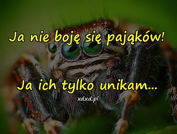 Ja nie boję się pająków! Ja ich tylko unikam...