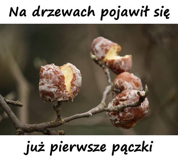 Na drzewach pojawił się już pierwsze pączki