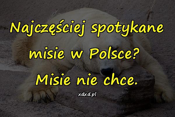 Najczęściej spotykane misie w Polsce? Misie nie chce.