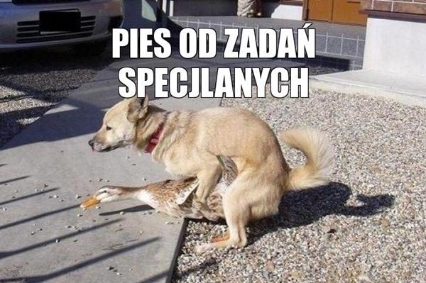 Pies od zadań specjalnych