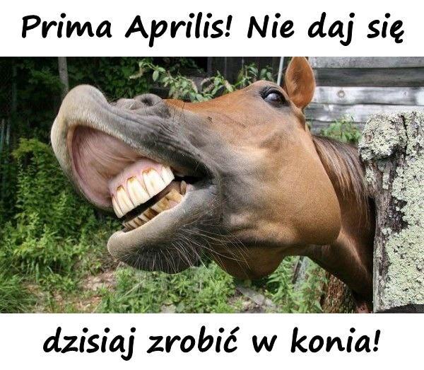 Prima Aprilis! Nie daj się dzisiaj zrobić w konia!