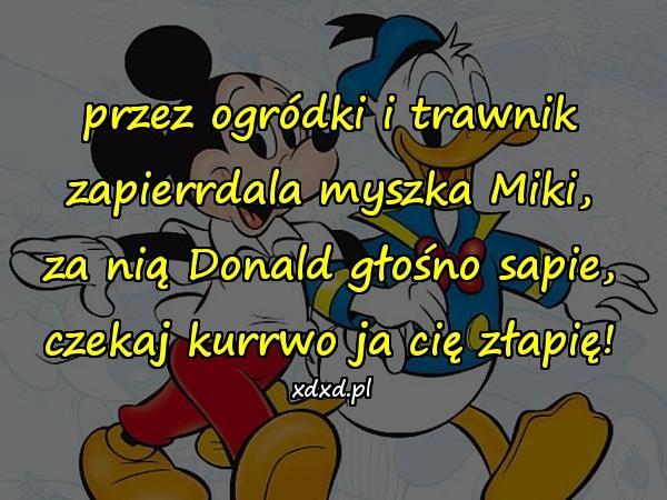 przez ogródki i trawnik zapierrdala myszka Miki, za nią Donald głośno sapie, czekaj kurrwo ja cię złapię!