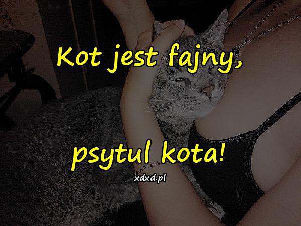 Kot jest fajny, psytul kota!