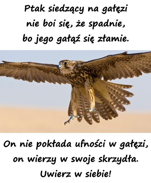 Ptak siedzący na gałęzi nie boi się, że spadnie, bo jego gałąź się złamie. On nie pokłada ufności w gałęzi, on wierzy w swoje skrzydła. Uwierz w siebie!