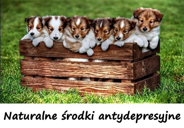 Naturalne środki antydepresyjne.