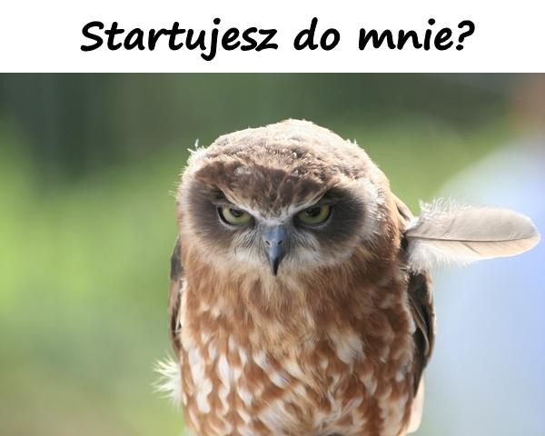 Startujesz do mnie?