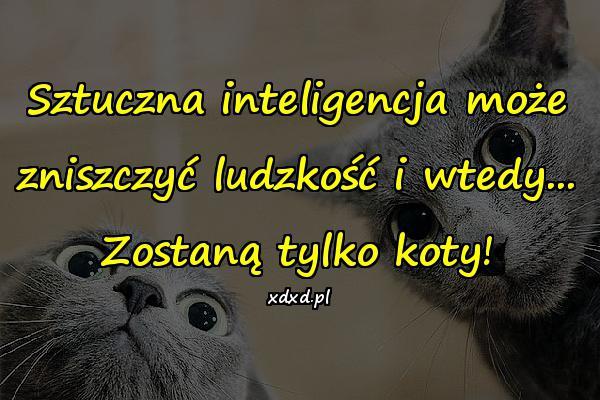 Sztuczna inteligencja może zniszczyć ludzkość i wtedy... Zostaną tylko koty!