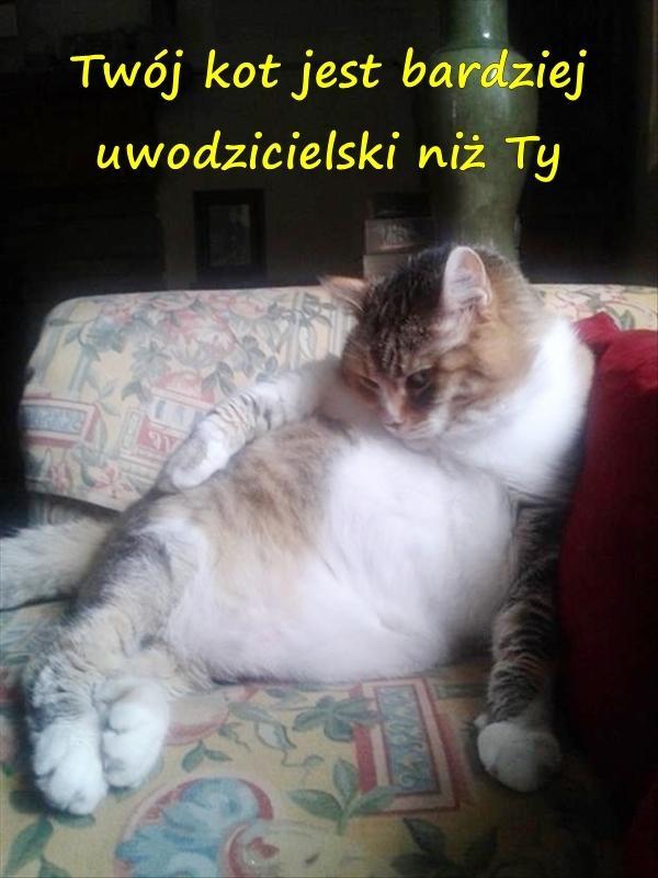 Twój kot jest bardziej uwodzicielski niż Ty