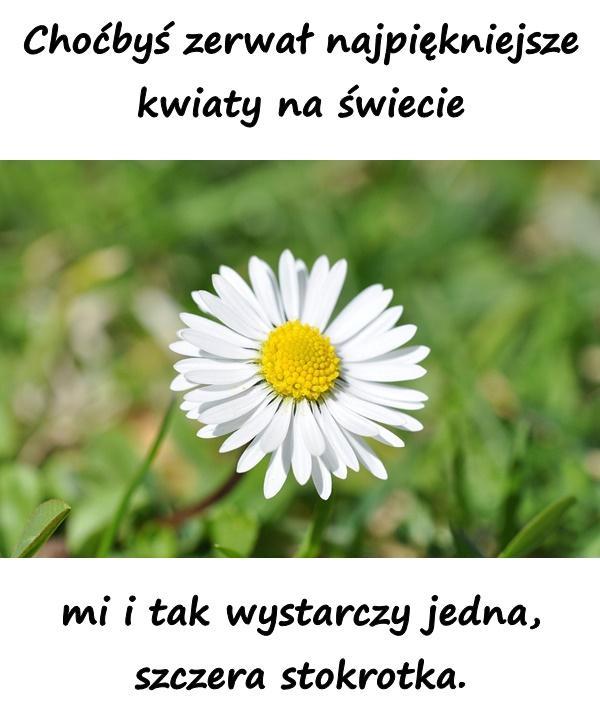 Choćbyś zerwał najpiękniejsze kwiaty na świecie mi i tak wystarczy jedna, szczera stokrotka.