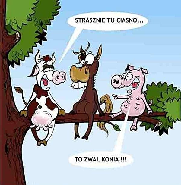 Strasznie tu ciasno... To zwal konia!!!
