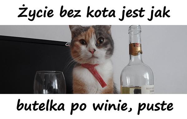 Życie bez kota jest jak butelka po winie, puste.